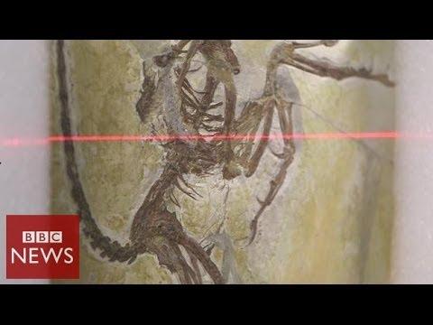 3D Scans unlock secrets of 'first bird' – BBC News