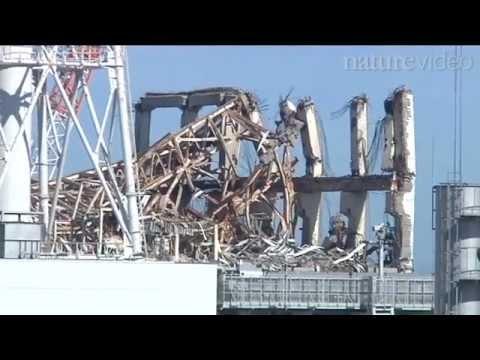 A year at Fukushima