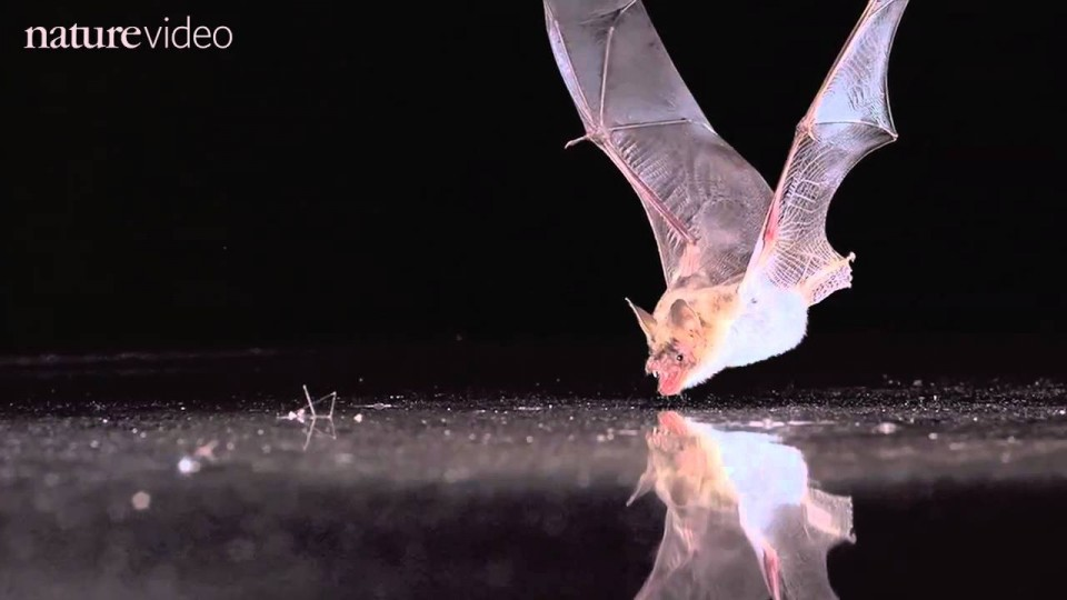 BAT SENSE – by Nature Video