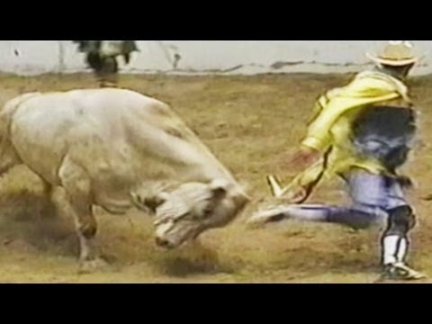 Bull fighting FUNNY VIDEOS