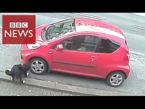 CCTV reveals dog as hunted car vandal – BBC News