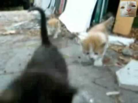 Cop Arrest 5 Cute Kittens