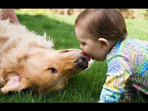 Cute Dogs Giving Babies Kisses Compilation 2013 [NEW HD]