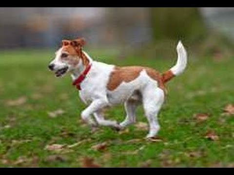 Cute Dogs Walking Funny Compilation 2014 [NEW HD]