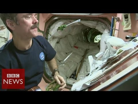 Food 'out of this world' – BBC News