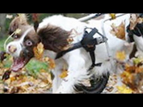 Funny Animal Compilation — FUNNY DOGS