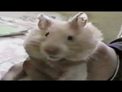 FUNNY Animal FAIL Compilation