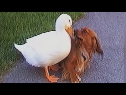 Funny Animal Video Clips Fail Compilation 2014