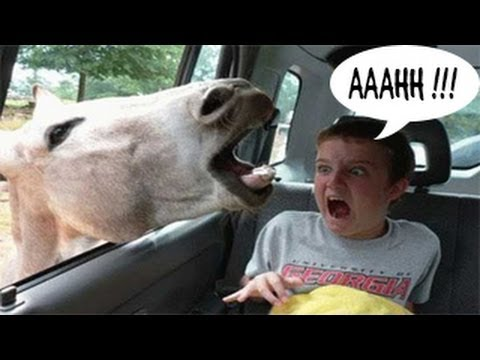 Funny Animals : Funny Animal Attacks