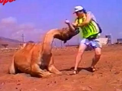 Funny Animals – Funny Animal Attacks Caught On Tape