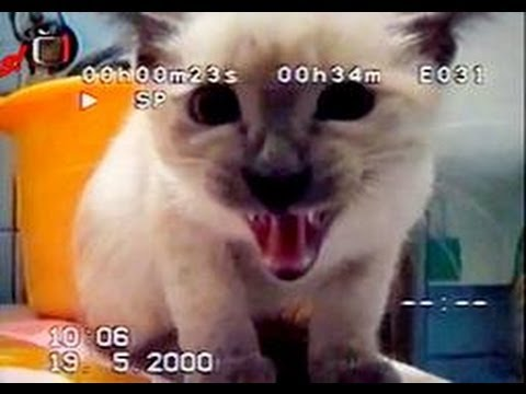 Funny Animals – Funny Cat Videos and Bloopers