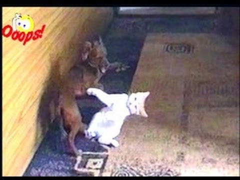 Funny Animals – Funny Dogs & Cats  – Animal Attacks