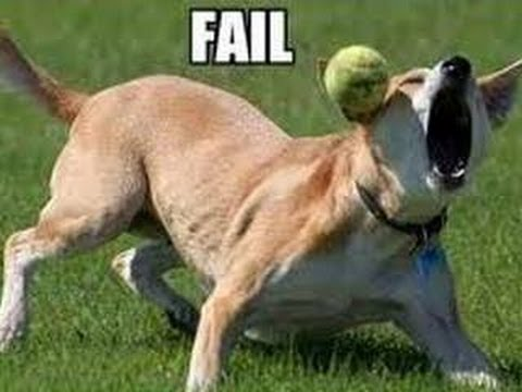 Funny Animals – Funny Dogs FAIL Compilation