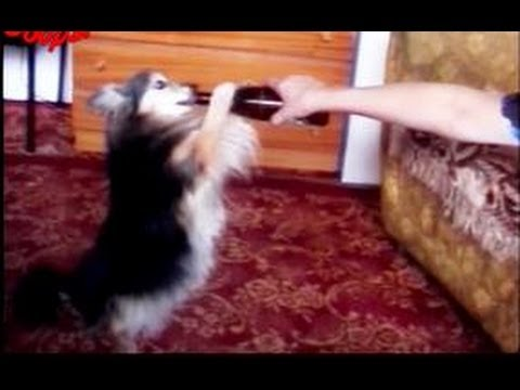 Funny Animals : Funny Dogs Video Compilation