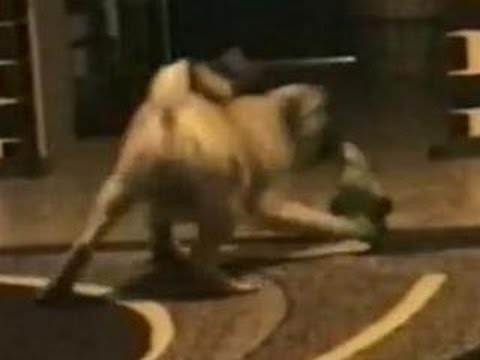 Funny Animals – Funny Home Videos – Parrot Beats Up Crazy Dog