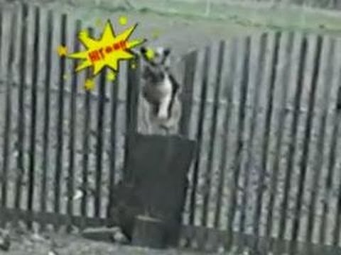 Funny Animals – Funny Home Videos – Dog Goes Nuts