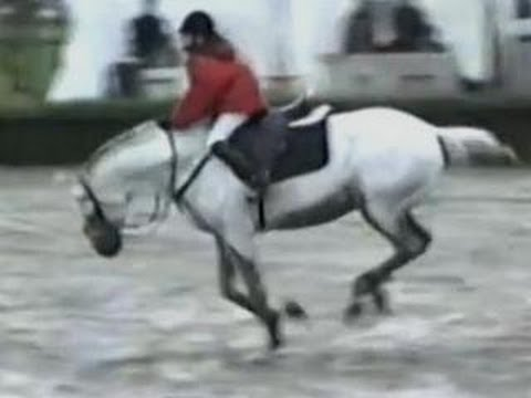Funny Animals – Funny Home Videos – Hilarious Horse Act Ever