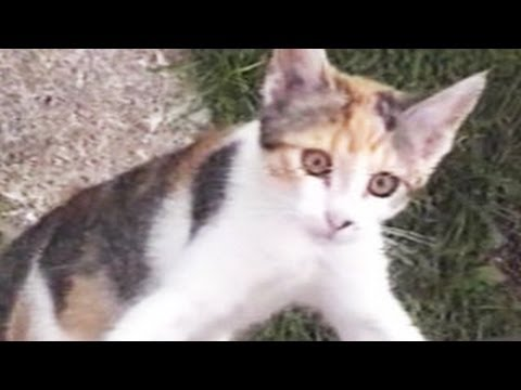 FUNNY CAT Video – Funny Home Video Compilation
