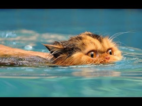 Funny Cats Love Water Compilation 2013