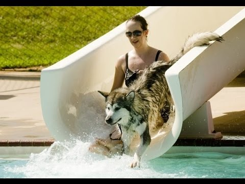 Funny Dogs on Water Slides Compilation 2014 [NEW HD]
