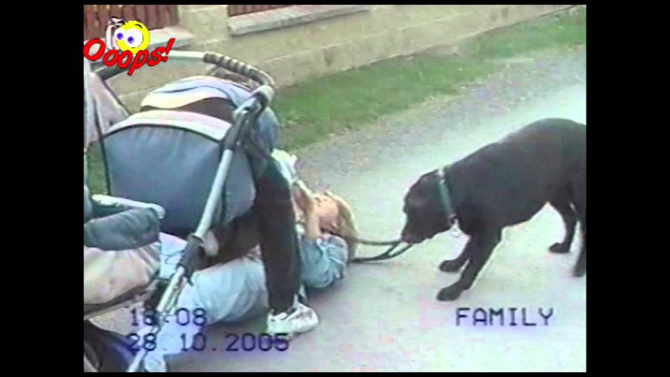 Funny Home Videos – Top 50 Funniest Videos Ever