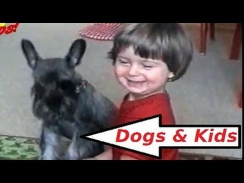 Funny Kids & Funny Dogs Compilation