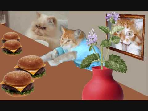 Keyboard Cat And Cranky Cat Cheeseburger Party