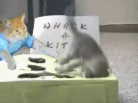 Keyboard Cat Whacks A Kitty