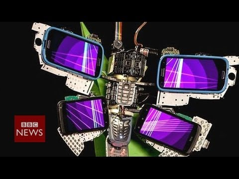 Making 'digital animals' from old phones – BBC News