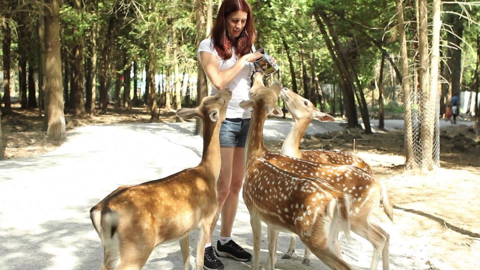 Parc Safari – Feeding the Deer