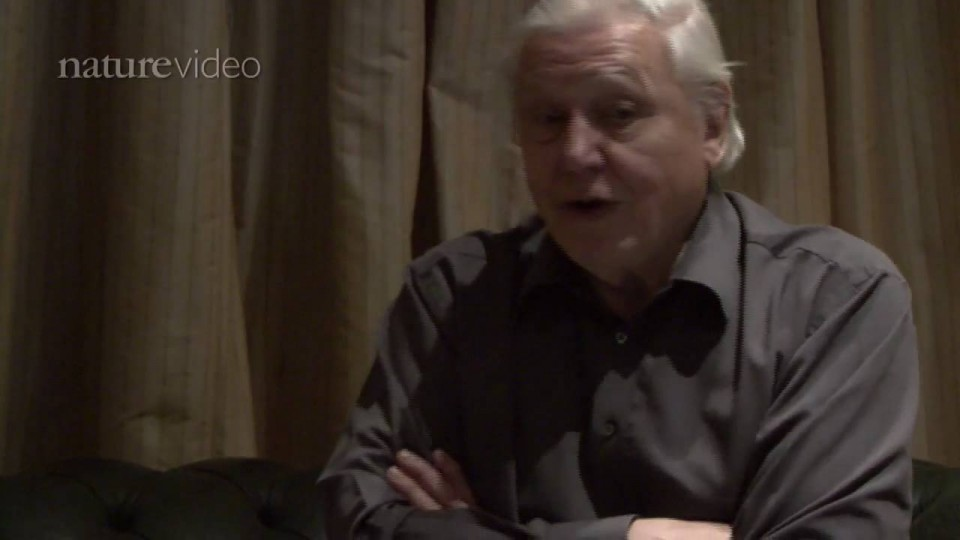 PART 1: David Attenborough on Darwin – by Nature Video