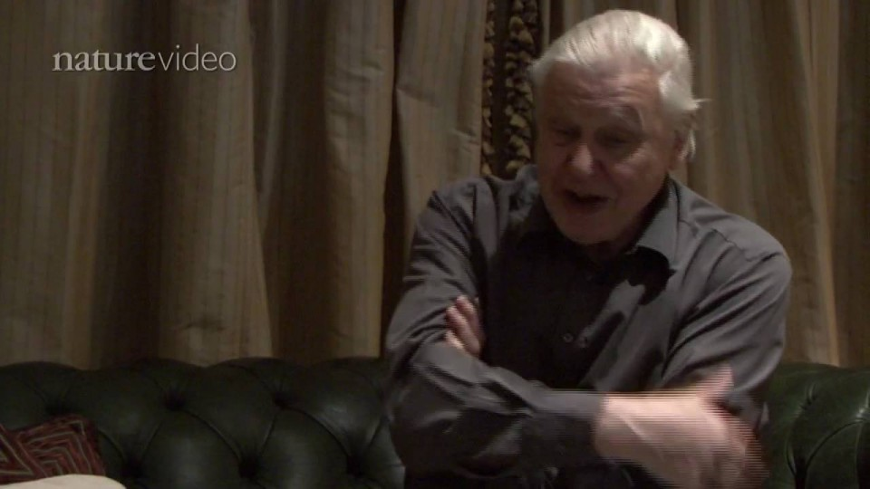 PART 2: David Attenborough on birds of paradise – by Nature Video