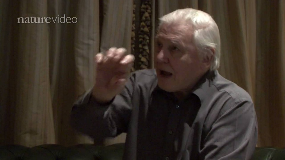 PART 3: David Attenborough: Scientist or Broadcaster? – by Nature Video
