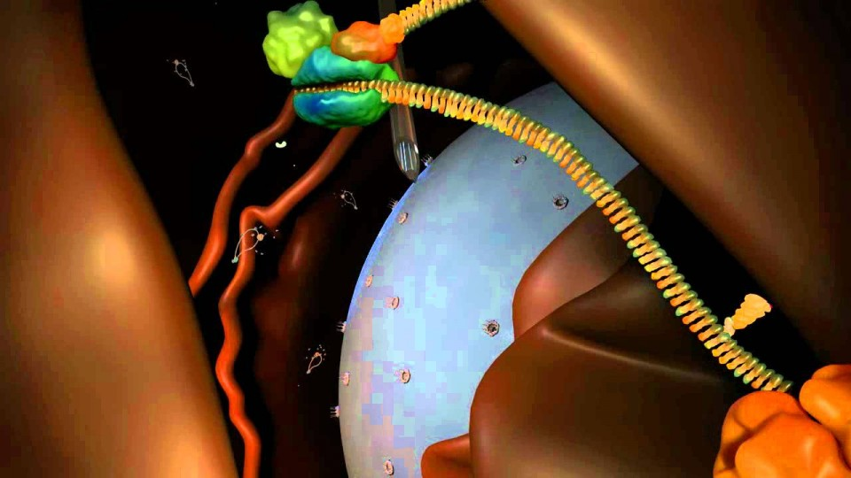 RNA interference (RNAi): by Nature Video