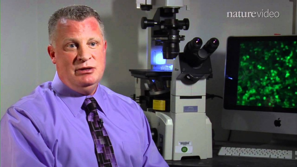 Stem cells put women on fertile ground – by Nature Video