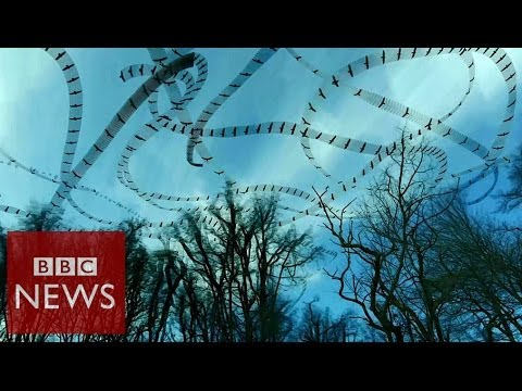 Stunning flight patterns revealed by video effect – Click – BBC News