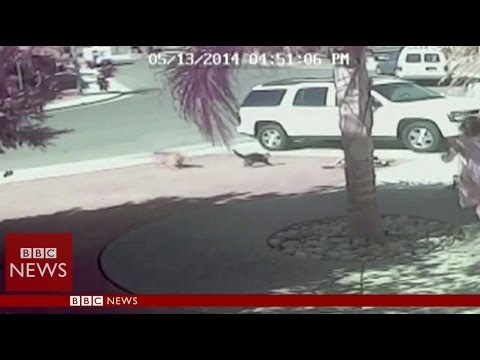 'Super Cat' saves boy from dog attack in California – BBC News