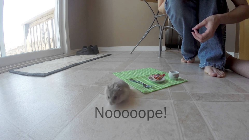 Tiny hamster eating a tiny pizza – Behind the scenes