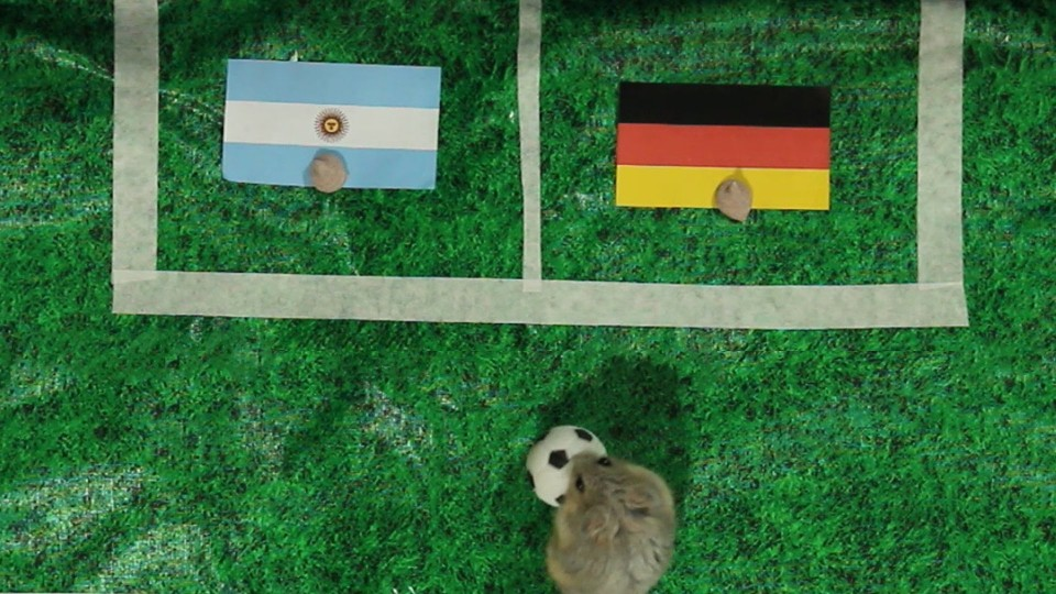 Tiny Hamster Predicts 2014 World Cup Finals – Germany vs Argentina