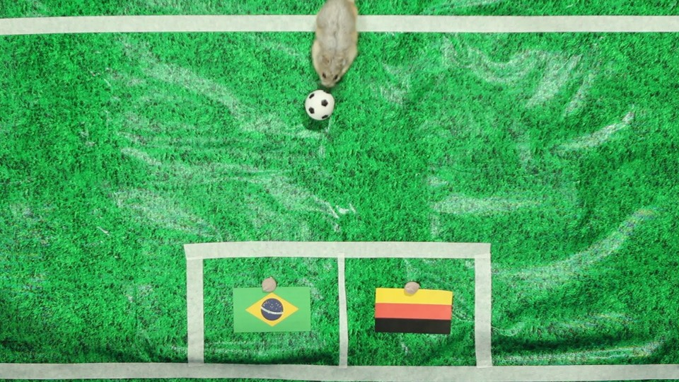Tiny Hamster Predicts 2014 World Cup Semi-Finals – Germany vs Brazil