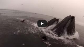 Assurdo, sfuggono per un soffio al morso di una balena.