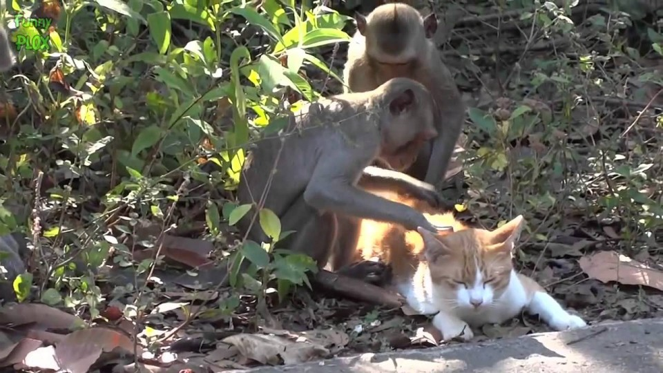 Cute Animal Odd Couples Compilation 2014 [NEW HD]