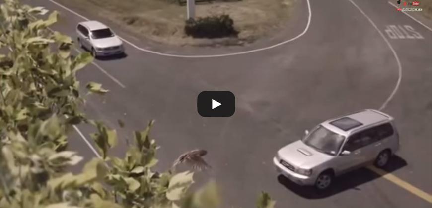 Campagna sensibilizzazione sicurezza stradale | Speed ad Mistakes