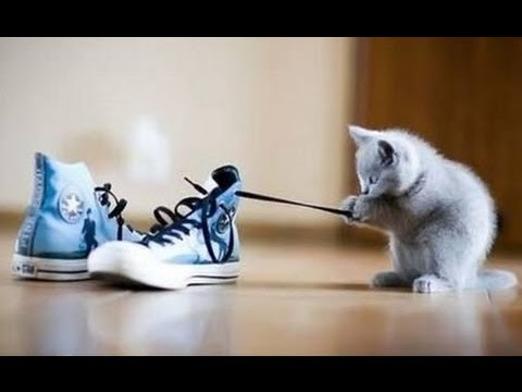 Ultimate Cute Cats Playing with Strings Compilation 2013 [NEW HD]