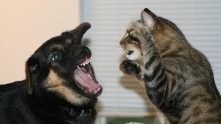 Ultimate Dogs vs Cats Compilation 2013 [NEW HD]