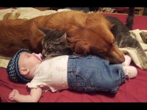 Babies and Animals Sleeping Together Compilation 2014 [NEW HD]