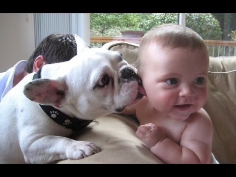 Best Babies and Animals Compilation 2014 [NEW HD]