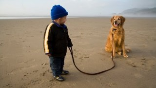 Cute Babies Walking Dogs Compilation 2014 [NEW HD]