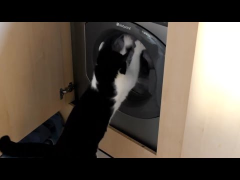 Funny Cats vs Washing Machines Compilation 2014 [NEW HD]