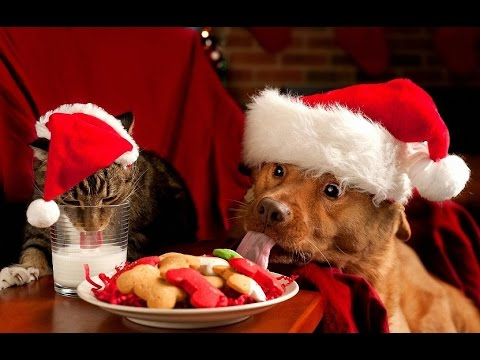 Cute Cats and Dogs Love Christmas Compilation 2014 [NEW HD]